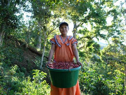 12) Panama Kahvesinin Özellikleri
