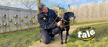 Dogs Trust | Handpicked Wetherby