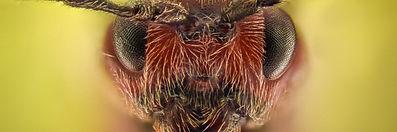 Harrogate Fire Ants Rugby League   Handpicked Harrogate