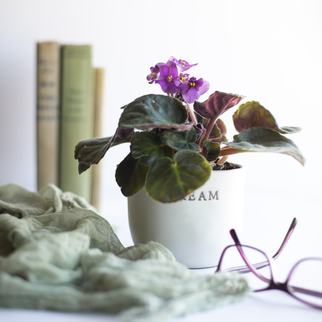 15 Colourful Houseplants to Grow at Home