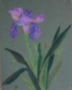 Iris B 72 P  Of - copie.jpg