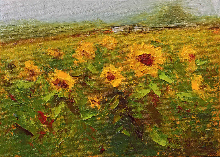 Sunflowers at Hellerick's Farm