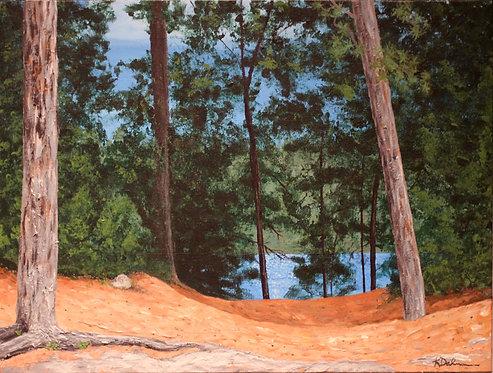 Pine Tree Shore
