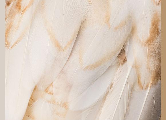 Dory Silk Medium square