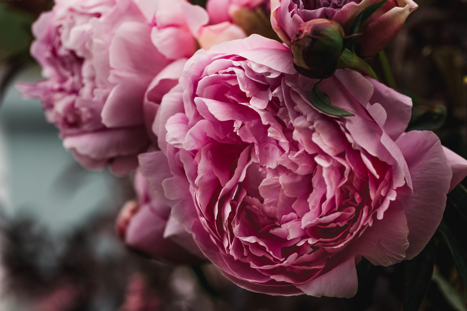 Beautiful Peonies Creating Romance