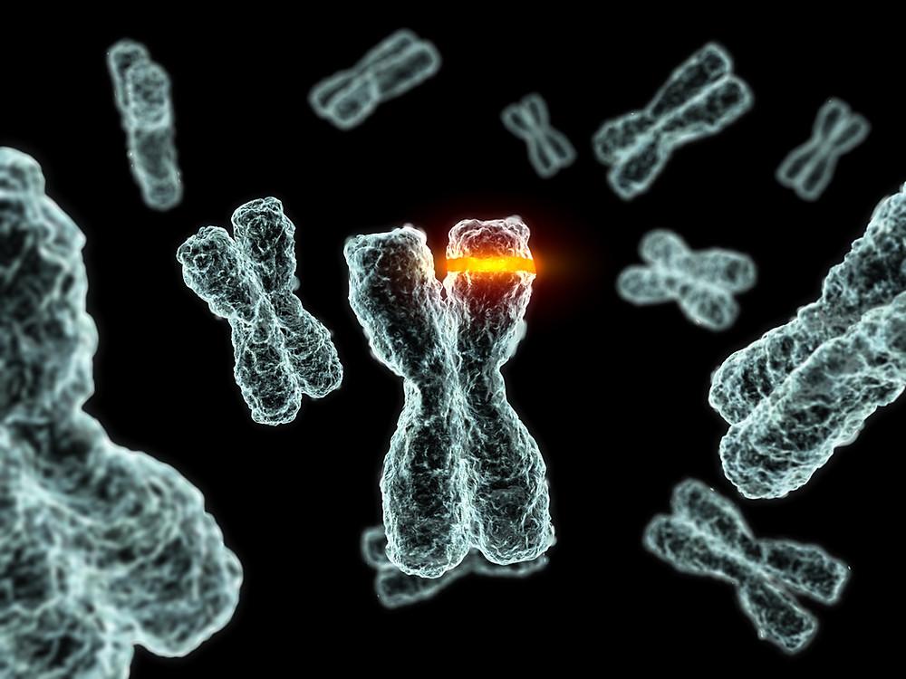 Epigenetik — Low Carb ändert die Genexpression