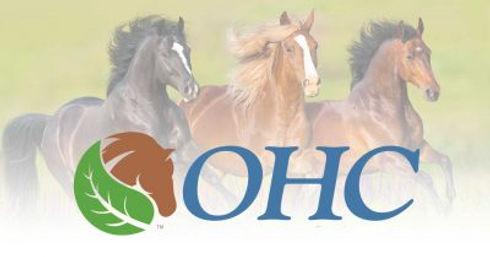 horses - ohc.jpg