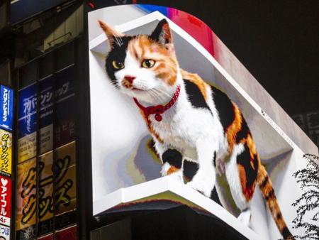 Giant 3D cat billboard has taken over Japan