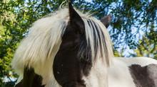 HOBUHOID - hobuste vabapidamine