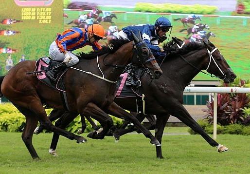 新加坡金盃賽馬日:國王路易強勢登基