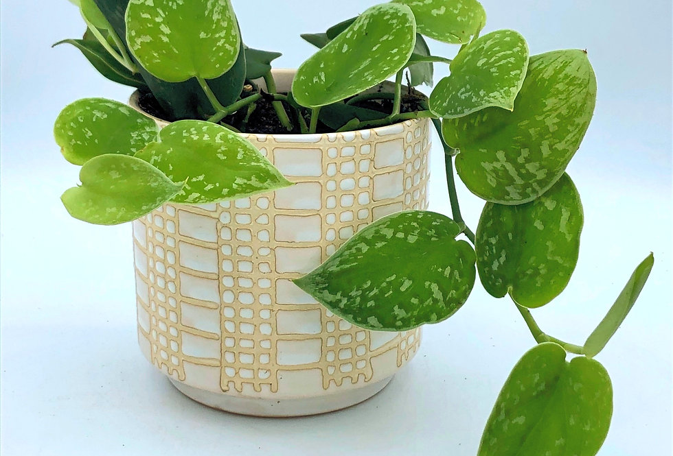 """Tropical Plant (4"""") in Pearl White"""