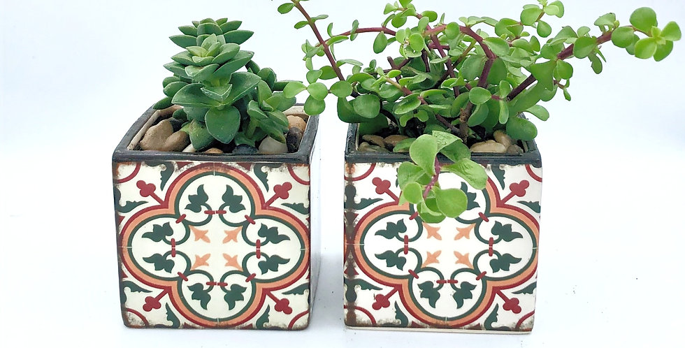 "Two Succulents (2"") In Mosaic Pots"