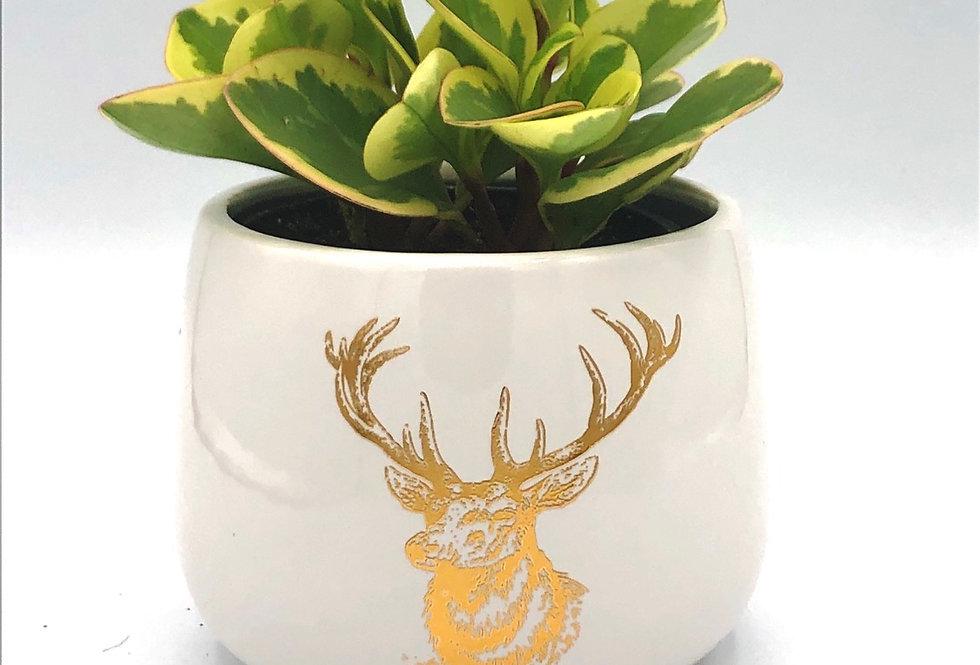 """Golden Buck Pot (4"""")"""