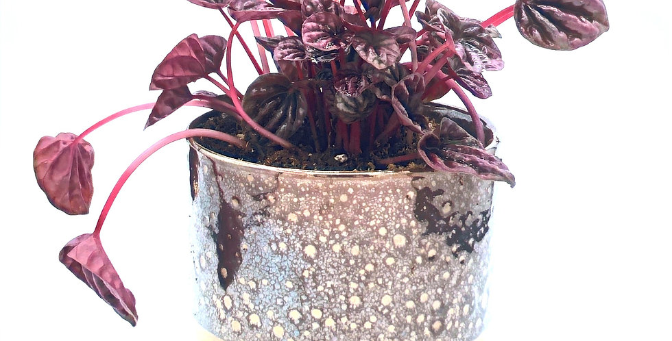 """Tropical Plant (4"""")  in Brown Speckle"""