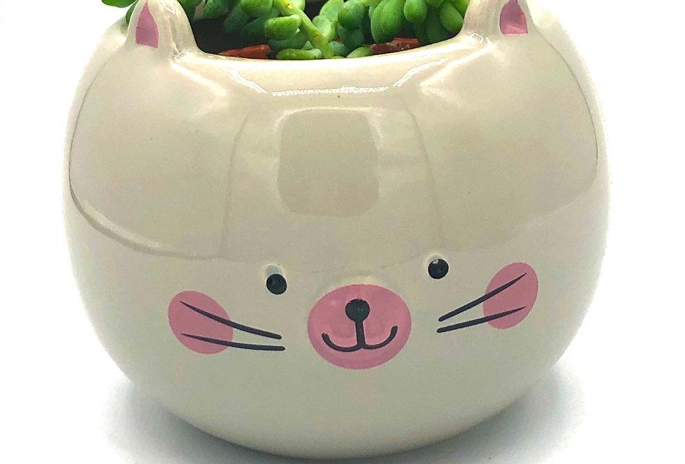 "Cute Kitty Pot (2"")"