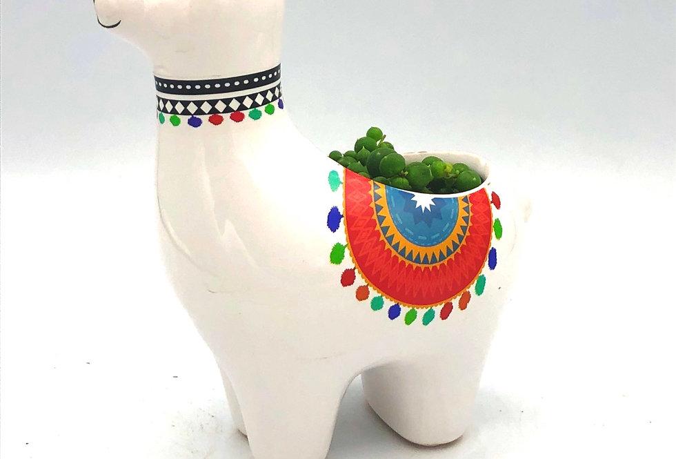Red Llama Pot