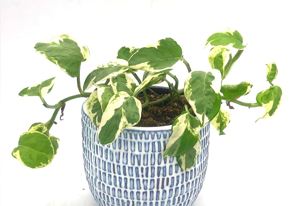 "Tropical Plant (4"") in Ceramic Navy"