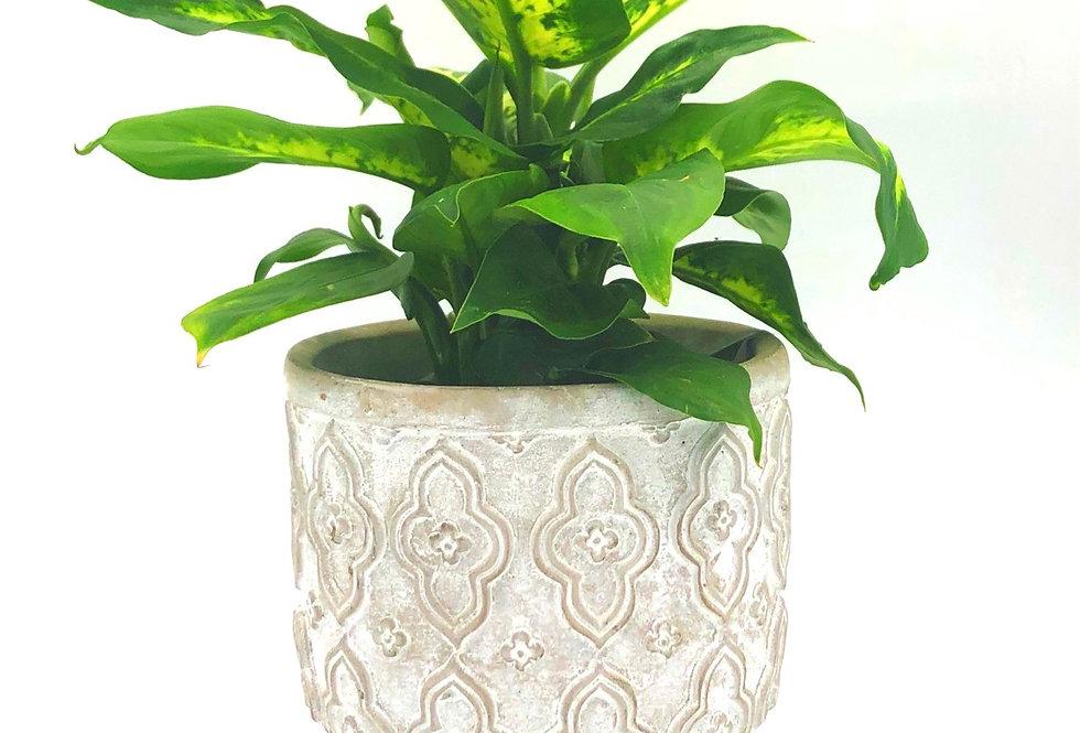 "Tropical Plant (4"") In Barnhouse Pot"