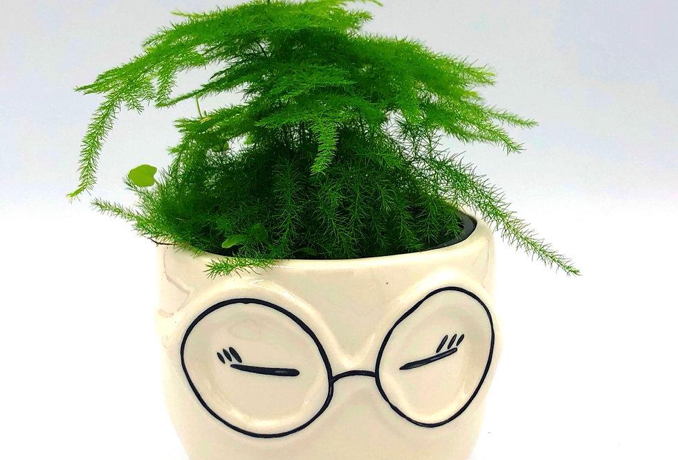"""Sexy Librarian Pot (4"""")"""