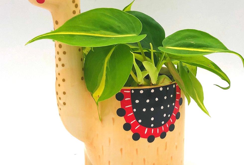 """Tropical plant (4"""") in Llamacorn Pot"""