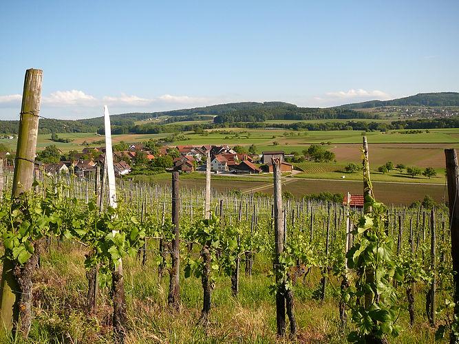 Schweizer Rotweine in Flaschen