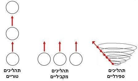 תהליכים טוריים מקביליים ספירלים.jpg