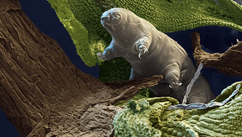 Tardigrade - najizdržljivije biće na planeti!