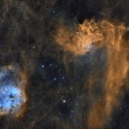 Flaming Star & Tadpoles