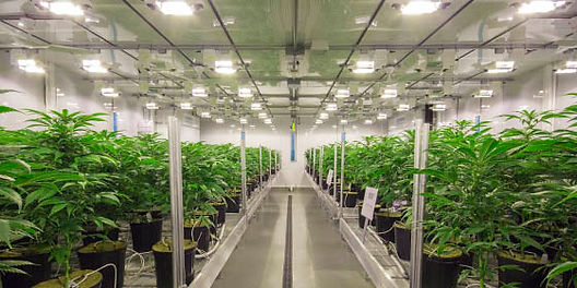 cannabis-grow-room-560x280.jpg