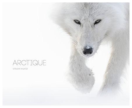 Arctique / Vincent Munier