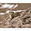 Thumbnail: Tibet, minéral animal / Vincent Munier