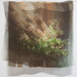 Golden Light, Growing Wild, 2017