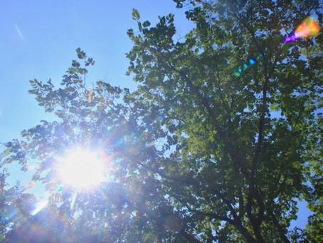 今年1番の猛暑日