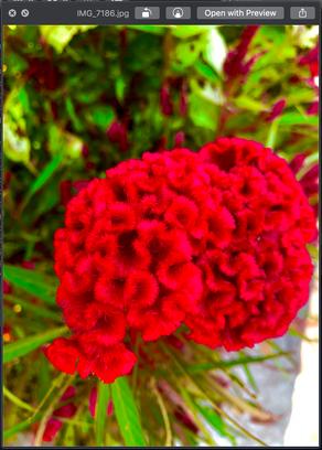 Chongming Red