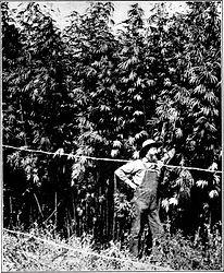 Oregon Hemp and Cannabis Testing