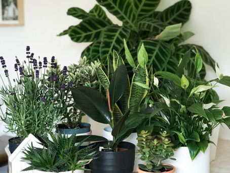 Why Is Everyone Buying Plants?