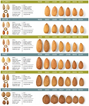 California Almond Varieties - Infographi