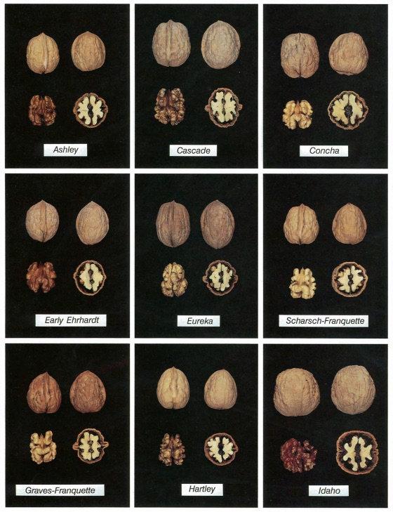 Walnut - Cultivars 1.jpg