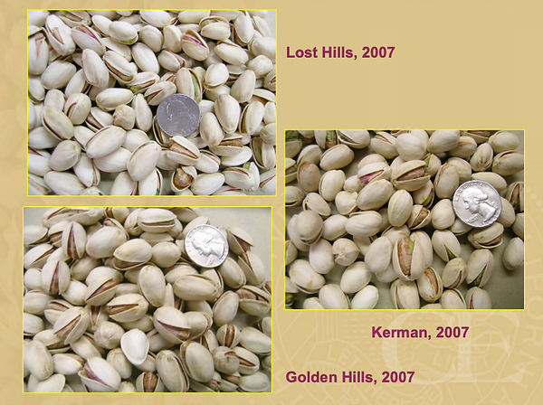 All 3 Major California Pistachio Varieti