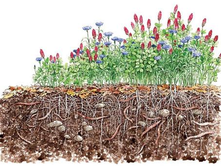 Cover Crops. Friends of Organic Farming.