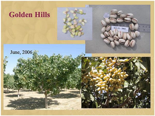 Golden Hills Pistachios.png