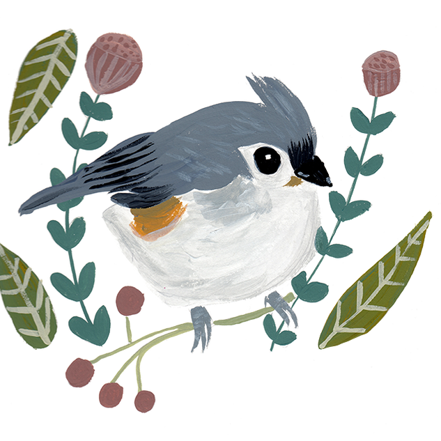 Tufted Titmouse (the first version)