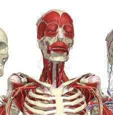 Anatomy TV