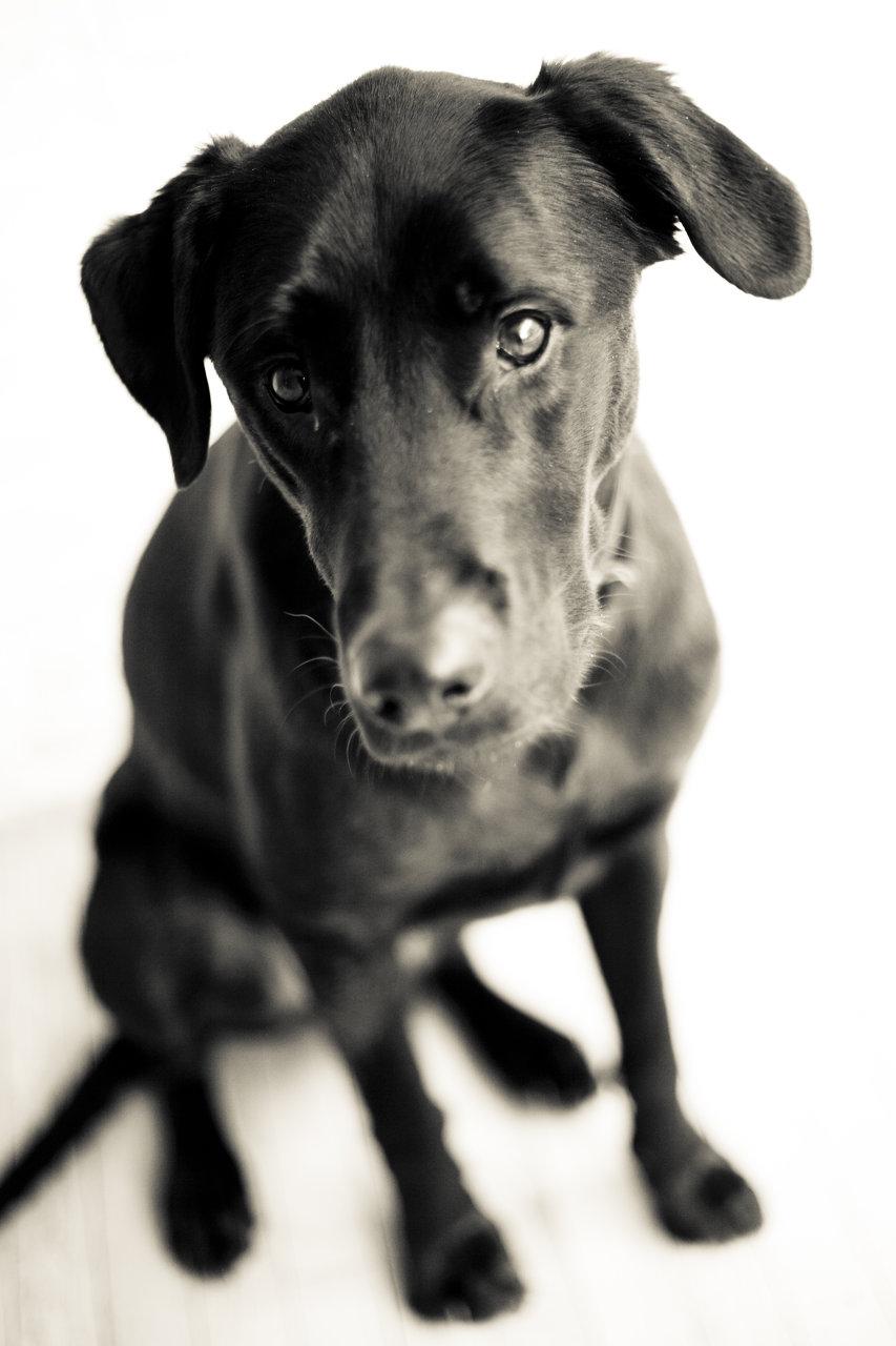 maine dog photographer