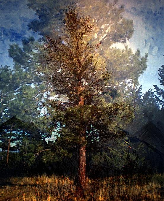 Grandfather Tree.jpg