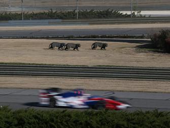 Notes & Quotes: Honda Indy Grand Prix of Alabama
