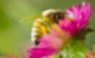bee face deep copy.jpg