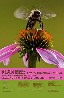 plan bee nevada city .jpg
