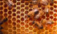 bees on comb orange copy.png