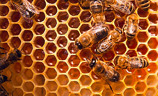 bees on comb orange copy.png